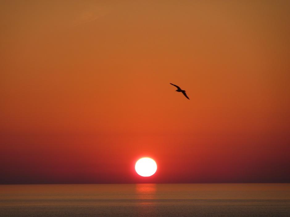 Orange Sonnenuntergang Horizont Möwe Meer