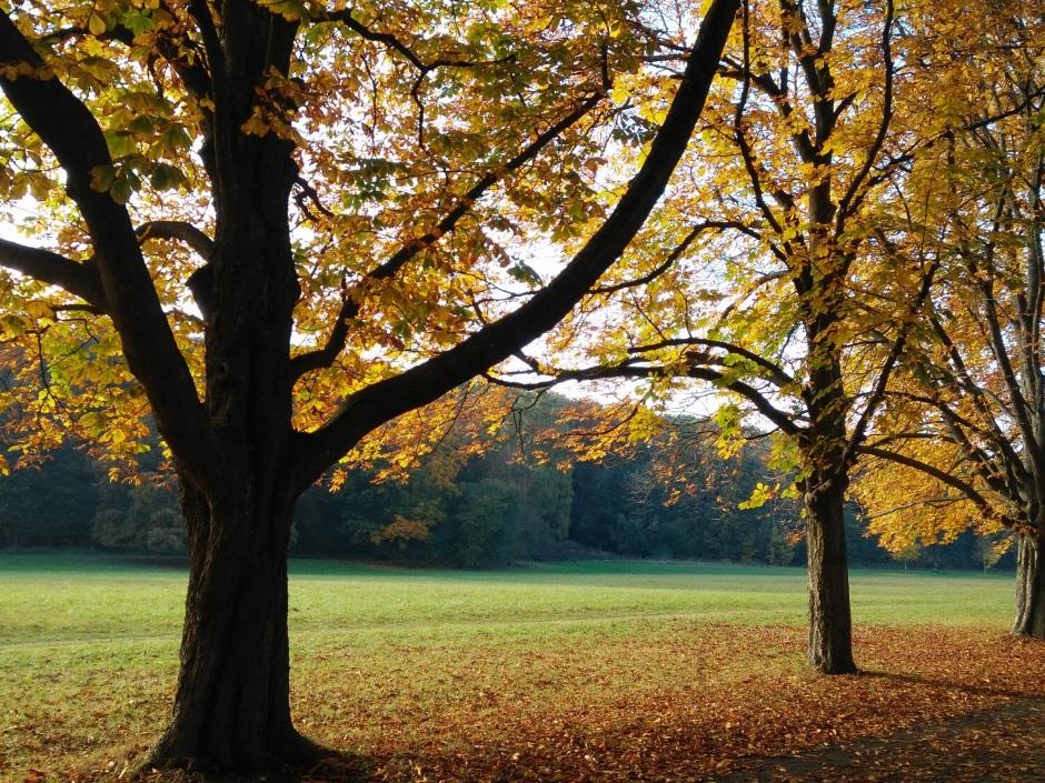 Kastanienbaum Allee in Herbstfarben